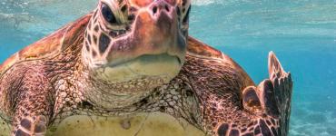Algemene winnaar van de Comedy Wildlife Photography Awards werd Mark Fitzpatrick met een foto van een schildpad die er duidelijk genoeg van heeft en zijn 'middelvinger' opsteekt.