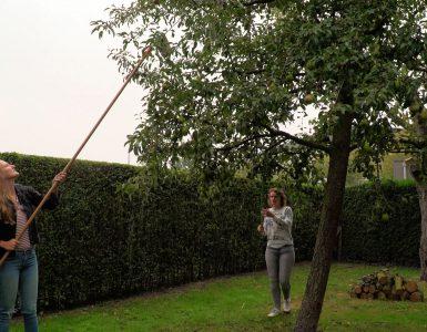Inmiddels heeft Rosemarijn van de Wiel met haar initiatief 'Vergeten Fruit' al een aardige lijst met bomen die ze elk jaar kan bezoeken.