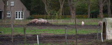 De term 'Herenboer' ken je wellicht uit de geschiedenisboeken. Het personeel van zo'n boer bekommerde zich over de oogst, terwijl de 'heer' liever alleen de figuurlijke vruchten plukte. Op de moderne variant van de herenboerderij gaat het er iets anders aan toe. De boerderij wordt gepacht door een coöperatie.