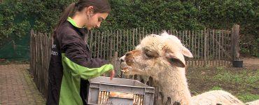 Het geld dat dierenpark De Oliemeulen wil ophalen in de actieweek die van start is gegaan is nodig om 750 dieren in het park te kunnen blijven verzorgen.